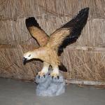 46 - Falco - Donatella Salvietti