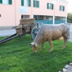 55 - Mucca che bruca - MarioTomasoni e famiglia
