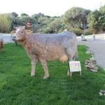 54 - Mucca - Associazione Amici del pensare cristiano